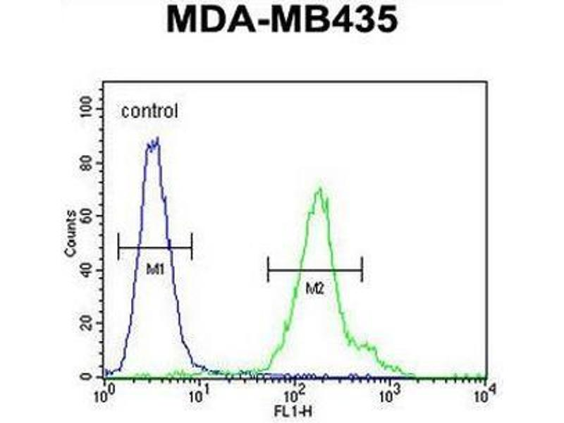 Flow Cytometry (FACS) image for anti-Chromosome 21 Open Reading Frame 2 (C21orf2) (AA 172-202), (C-Term) antibody (ABIN950879)