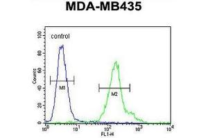 Image no. 1 for anti-Chromosome 21 Open Reading Frame 2 (C21orf2) (AA 172-202), (C-Term) antibody (ABIN950879)