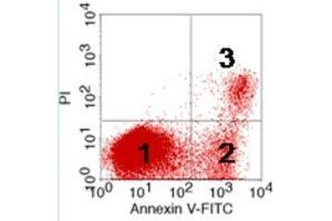 Flow Cytometry (FACS) image for Apoptosis Detection Kit (Annexin-V-FITC / PI) (ABIN2746064)
