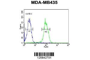 Flow Cytometry (FACS) image for anti-VEGFR2 antibody (Kinase insert Domain Receptor (A Type III Receptor tyrosine Kinase)) (AA 1153-1182) (ABIN652371)