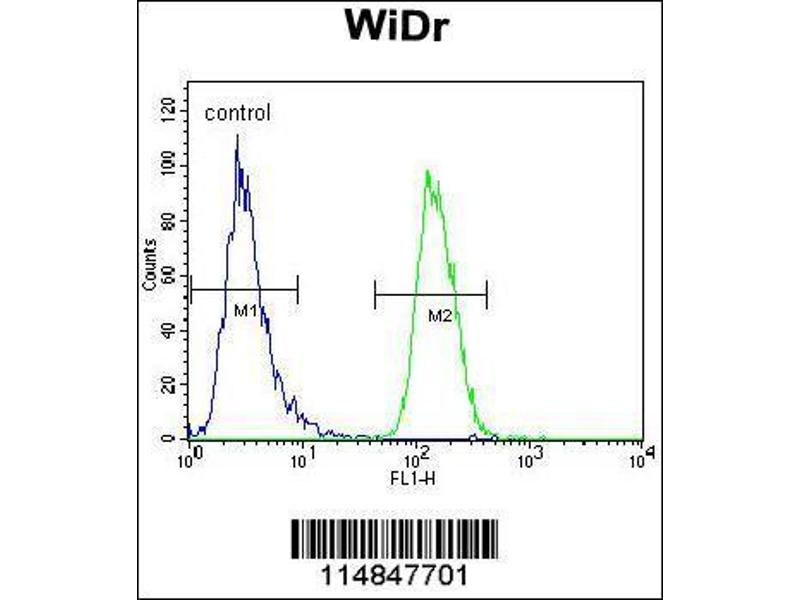 Flow Cytometry (FACS) image for anti-Asparaginyl-tRNA Synthetase (NARS) (AA 24-53), (N-Term) antibody (ABIN655041)