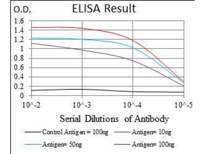 Image no. 1 for anti-HLA-DR-gamma (CD74) (AA 1-106) antibody (ABIN1724871)