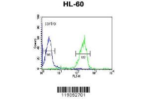 Flow Cytometry (FACS) image for anti-Granzyme B (GZMB) (AA 2-32), (N-Term) antibody (ABIN390495)