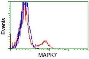 Flow Cytometry (FACS) image for anti-Mitogen-Activated Protein Kinase 7 (MAPK7) antibody (ABIN2725422)