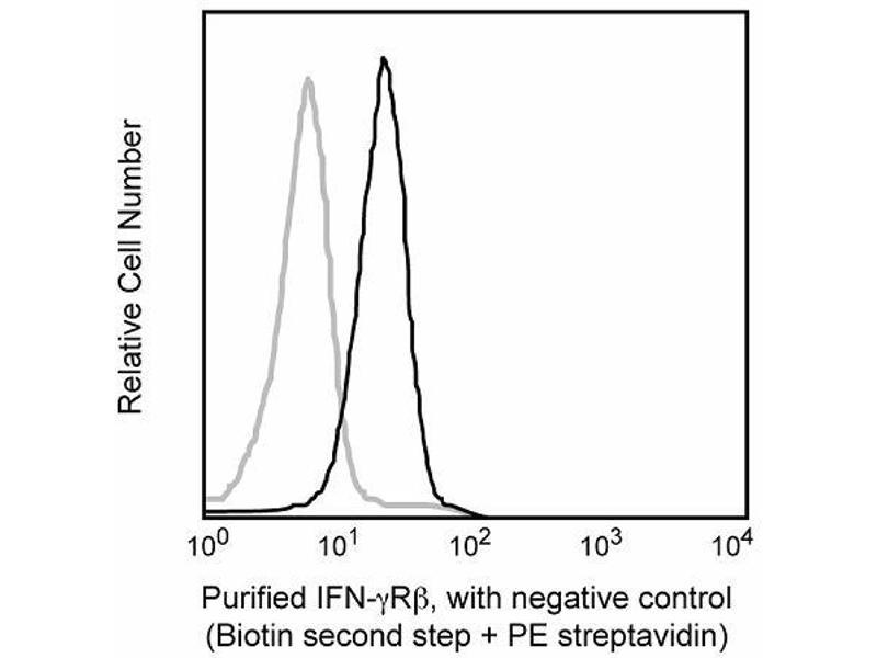 image for anti-IFN-gamma Receptor (Chain beta) antibody (ABIN967655)