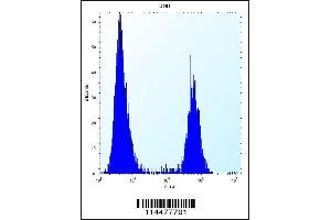 Flow Cytometry (FACS) image for anti-Pleiotrophin antibody (PTN) (AA 127-154) (ABIN656197)