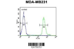 Flow Cytometry (FACS) image for anti-SMAD, Mothers Against DPP Homolog 3 (SMAD3) (AA 186-215), (Ser208) antibody (ABIN653953)