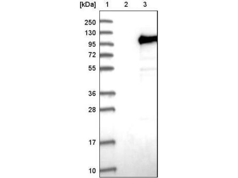 pdf biochemistry of mammalian alkaline phosphatases