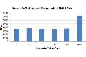 Image no. 1 for Chemokine (C-C Motif) Ligand 13 (CCL13) protein (ABIN6699596)