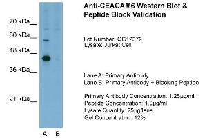 anti-Carcinoembryonic Antigen-Related Cell Adhesion Molecule 6 (Non-Specific Cross Reacting Antigen) (CEACAM6) (Middle Region) antibody (3)
