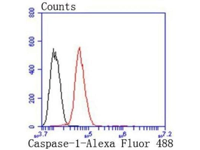 Flow Cytometry (FACS) image for anti-Caspase 1 (CASP1) (C-Term) antibody (ABIN5945465)