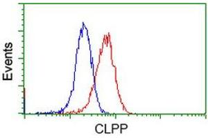 Image no. 3 for anti-ClpP Caseinolytic Peptidase, ATP-Dependent, Proteolytic Subunit Homolog (E. Coli) (CLPP) antibody (ABIN1497536)