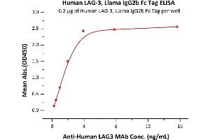 Image no. 1 for Lymphocyte-Activation Gene 3 (LAG3) (AA 23-450) protein (Fc Tag) (ABIN6253552)