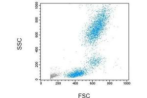 Flow Cytometry (FACS) image for NM LYSE: Flow Cytometry Lysing Solution (ABIN1741580)