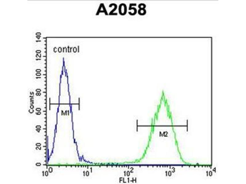 Flow Cytometry (FACS) image for anti-Chromosome 6 Open Reading Frame 70 (C6ORF70) (AA 346-375), (Middle Region) antibody (ABIN950958)
