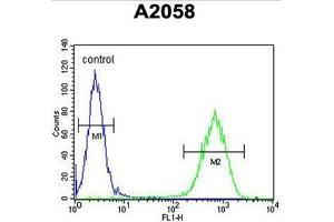 anti-Chromosome 6 Open Reading Frame 70 (C6ORF70) (AA 346-375), (Middle Region) antibody