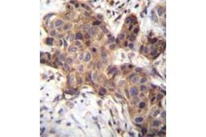 Image no. 1 for anti-Growth Differentiation Factor 9 (GDF9) (AA 87-117), (N-Term) antibody (ABIN952487)