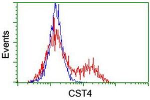image for anti-Cystatin S (CST4) antibody (ABIN1497667)