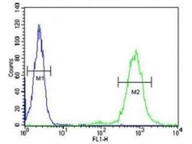 Image no. 1 for anti-CD69 (CD69) (AA 119-148) antibody (ABIN3030416)