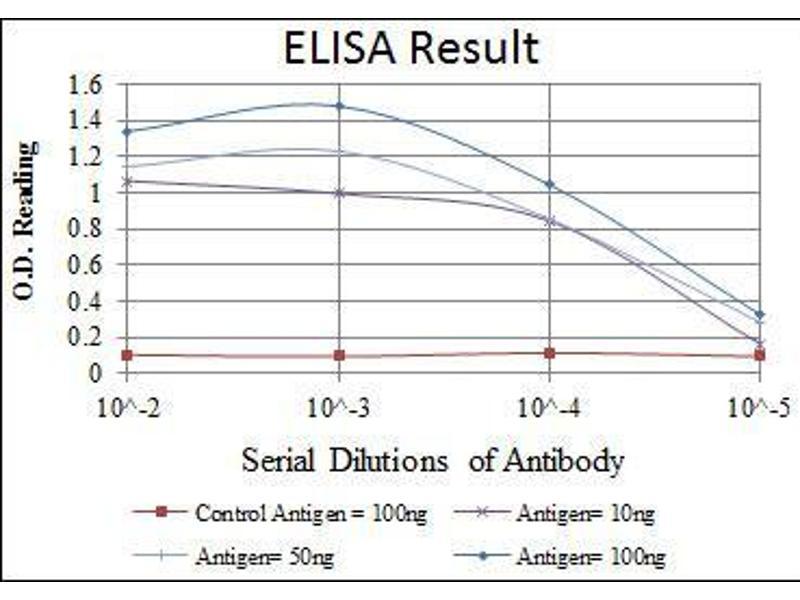 ELISA image for anti-Ataxia Telangiectasia Mutated (ATM) antibody (ABIN4880203)