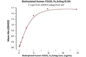 Image no. 2 for Folate Receptor 1 (Adult) (FOLR1) (AA 25-233) (Active) protein (Fc Tag,AVI tag,Biotin) (ABIN6731323)