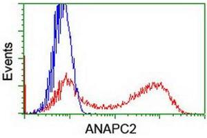 Image no. 1 for anti-Anaphase Promoting Complex Subunit 2 (ANAPC2) antibody (ABIN1496637)