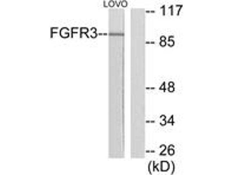 Western Blotting (WB) image for anti-Fibroblast Growth Factor Receptor 3 (FGFR3) (AA 131-180) antibody (ABIN1533273)