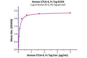 Image no. 2 for Cytotoxic T-Lymphocyte-Associated Protein 4 (CTLA4) (AA 37-160) (Active) protein (Fc Tag) (ABIN2180932)