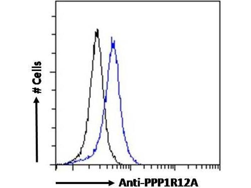 Image no. 2 for anti-Myosin Phosphatase, Target Subunit 1 (PPP1R12A) (C-Term) antibody (ABIN6391349)