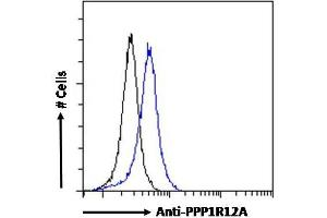 Image no. 2 for anti-Myosin Phosphatase, Target Subunit 1 (PPP1R12A) (C-Term) antibody (ABIN6391349)