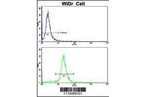 Flow Cytometry (FACS) image for anti-AXL antibody (AXL Receptor tyrosine Kinase) (ABIN391878)