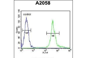 Image no. 3 for anti-Mitochondrial Ribosomal Protein S24 (MRPS24) (AA 21-50) antibody (ABIN5535365)