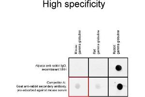 Image no. 8 for Alpaca anti-Rabbit IgG antibody (Alexa Fluor 568) - Preadsorbed (ABIN6810545)