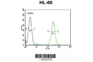 Image no. 1 for anti-F-Box and WD Repeat Domain Containing 11 (FBXW11) (AA 168-196), (Center) antibody (ABIN655166)