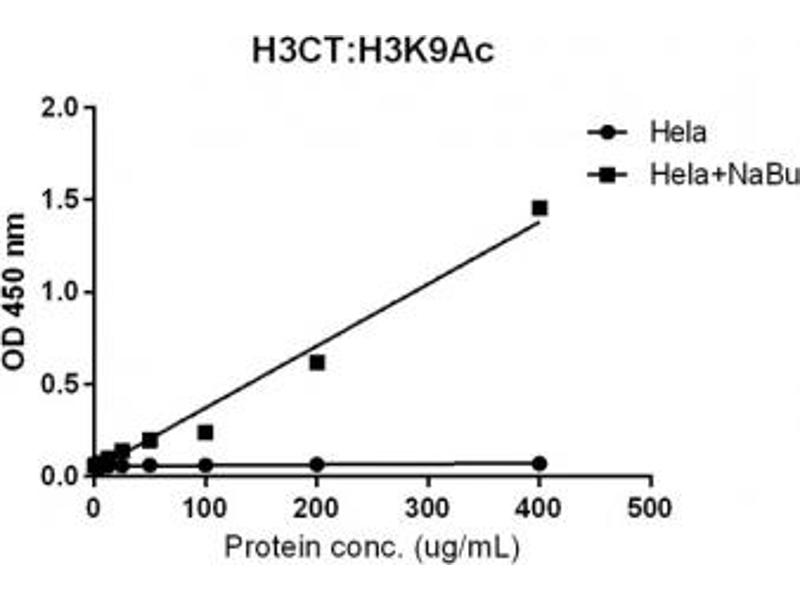 Image no. 1 for anti-Histone Cluster 3, H3 (HIST3H3) (C-Term), (pan) antibody (ABIN4953364)