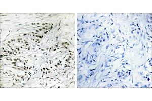 Image no. 1 for anti-ERF (Internal Region) antibody (ABIN1576351)