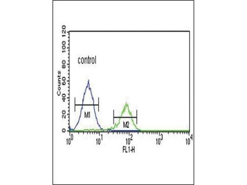 Flow Cytometry (FACS) image for anti-Proprotein Convertase Subtilisin/kexin Type 2 (PCSK2) (N-Term) antibody (ABIN4347751)