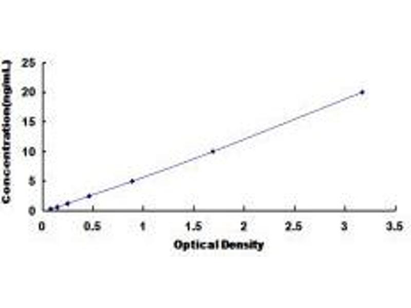 Glutamate Receptor, Ionotrophic, AMPA 3 (GRIA3) ELISA Kit