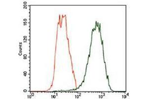 Flow Cytometry (FACS) image for anti-TUBB2A antibody (Tubulin, beta 2A) (AA 25-187) (ABIN1724832)
