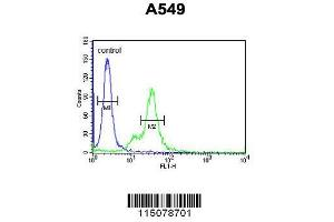 Image no. 2 for anti-Mannose-6-Phosphate Receptor (Cation Dependent) (M6PR) (AA 230-260), (C-Term) antibody (ABIN650726)
