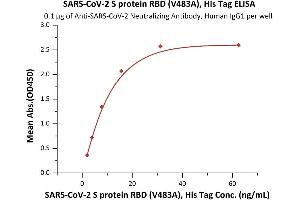 Image no. 1 for SARS-CoV-2 Spike S1 (RBD), (V483A) protein (His tag) (ABIN6953173)