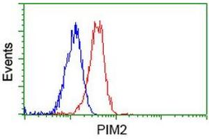 Image no. 7 for anti-Proto-Oncogene Pim-2 (Serine Threonine Kinase) (PIM2) antibody (ABIN1500220)