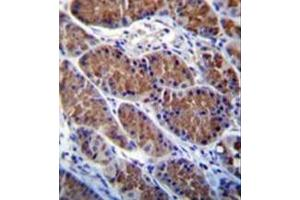 Image no. 1 for anti-Otopetrin 1 (OTOP1) (AA 367-396), (Middle Region) antibody (ABIN953949)