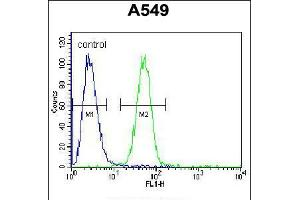Image no. 1 for anti-Ring Finger and WD Repeat Domain 2, E3 Ubiquitin Protein Ligase (RFWD2) (AA 37-65), (N-Term) antibody (ABIN5538462)