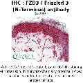 anti-FZD3 antibody (Frizzled Family Receptor 3) (N-Term)