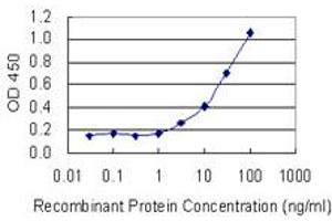Image no. 1 for anti-Far Upstream Element (FUSE) Binding Protein 3 (FUBP3) (AA 152-261) antibody (ABIN1326945)