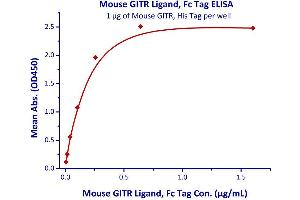 Image no. 1 for Tumor Necrosis Factor (Ligand) Superfamily, Member 18 (TNFSF18) (AA 47-173) (Active) protein (Fc Tag) (ABIN4949171)