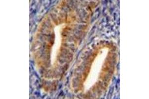 Image no. 3 for anti-Dipeptidyl-Peptidase 3 (DPP3) (AA 590-620), (C-Term) antibody (ABIN951978)