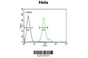 Image no. 2 for anti-CTP Synthase II (CTPS2) (AA 77-105), (N-Term) antibody (ABIN652725)