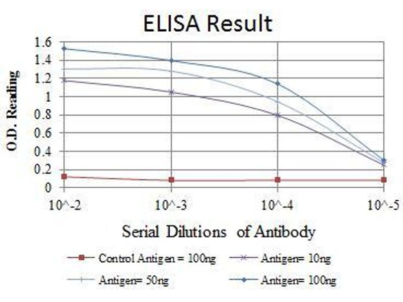 ELISA image for anti-EPH Receptor A10 (EPHA10) antibody (ABIN969100)